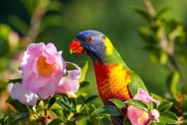 狸哥说:总结鹦鹉缺乏维生素的症状和补救措施